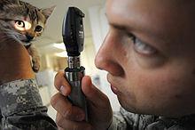 Kitten_check_up