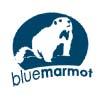 Blue Marmot